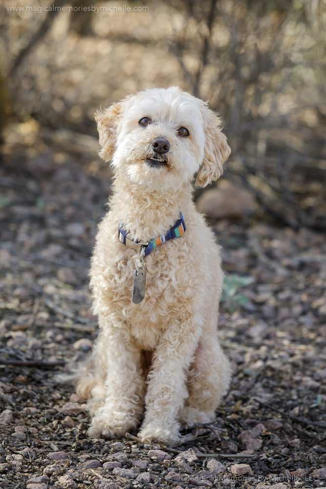 Maricopa AZ Senior Pictures Pets